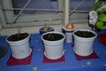 Sužaliavo prieskoniniai augalai
