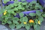 """Džiuginantys """"Žalioji oazė"""" rezultatai ir derlius"""