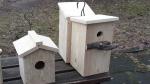 Pasitinkant sugrįžtančius paukščius – iškelti inkilai