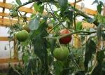 "Projekto ""Žalioji Oazė"" rudeninis derlius"