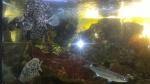 Priežiūroje esančių nepilnamečiių apsilankymas Visagino akvariumų salone