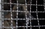 Lukiškių tardymo izoliatoriuje-kalėjime buvo atliekamos kratos su tarnybiniais šunimis