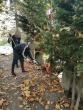 Šiauliuose, Vilniuje ir Pravieniškėse nuteistieji padėjo tvarkyti kapines