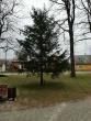 Pravieniškių pusiaukelės namų nuteistieji vyko puošti Kruonio miestelio kalėdinės eglės