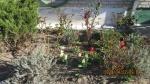 Žaliojoje oazėje įsibėgėjo pavasario darbai
