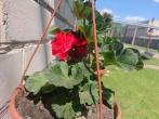Gėlių sodinimas Trečiajame sektoriuje-smagi pramoga