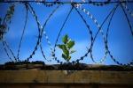 Keli žingsniai iki laisvės ne visiems nuteistiesiems vienodai vertingi